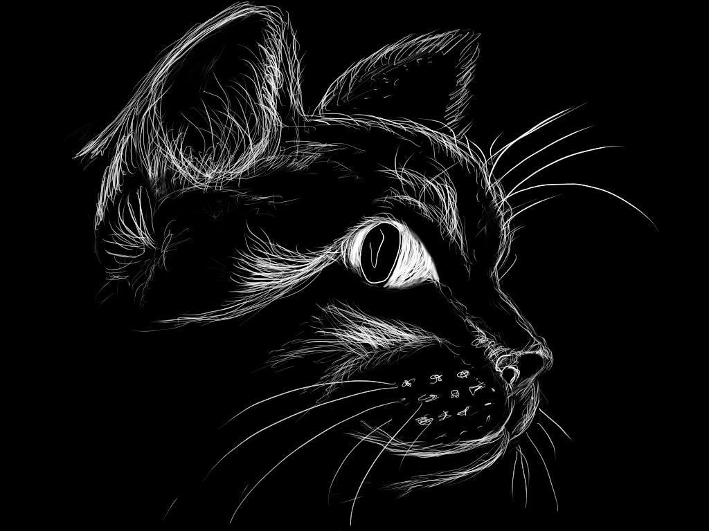 Черный кот на черном фоне. Рисунок