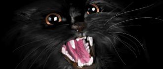 Злобный черный кот на черном фоне