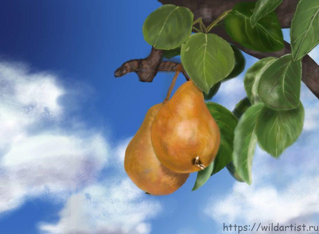 груши на дереве, рисунок