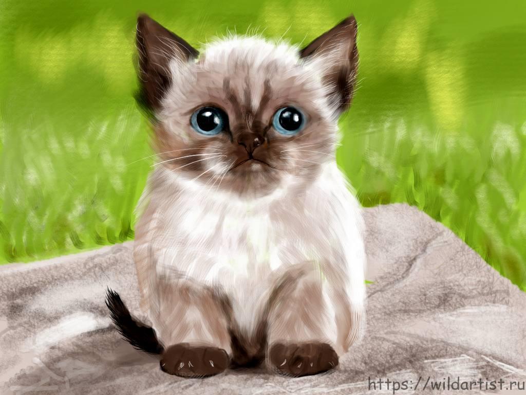 рисунко котенка