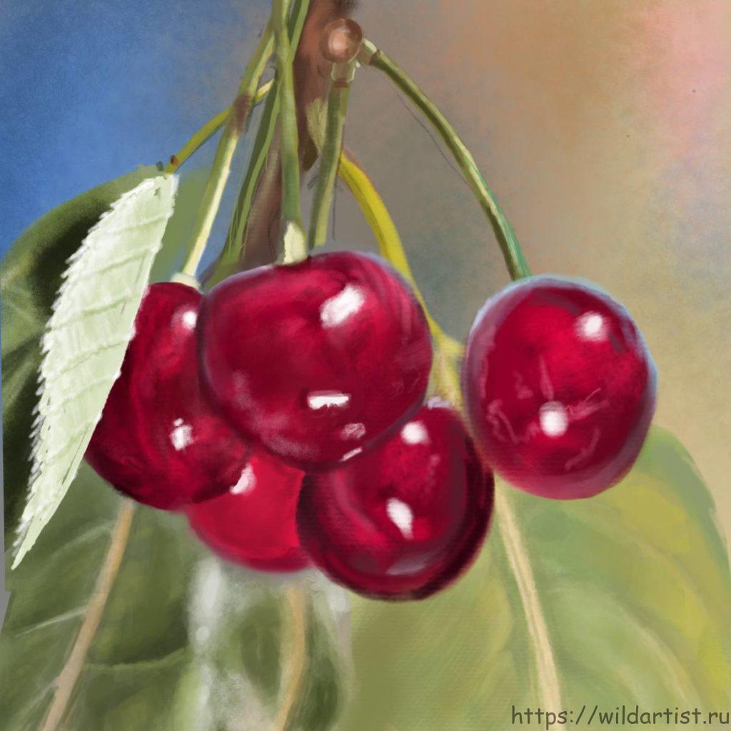рисунок вишни на дереве