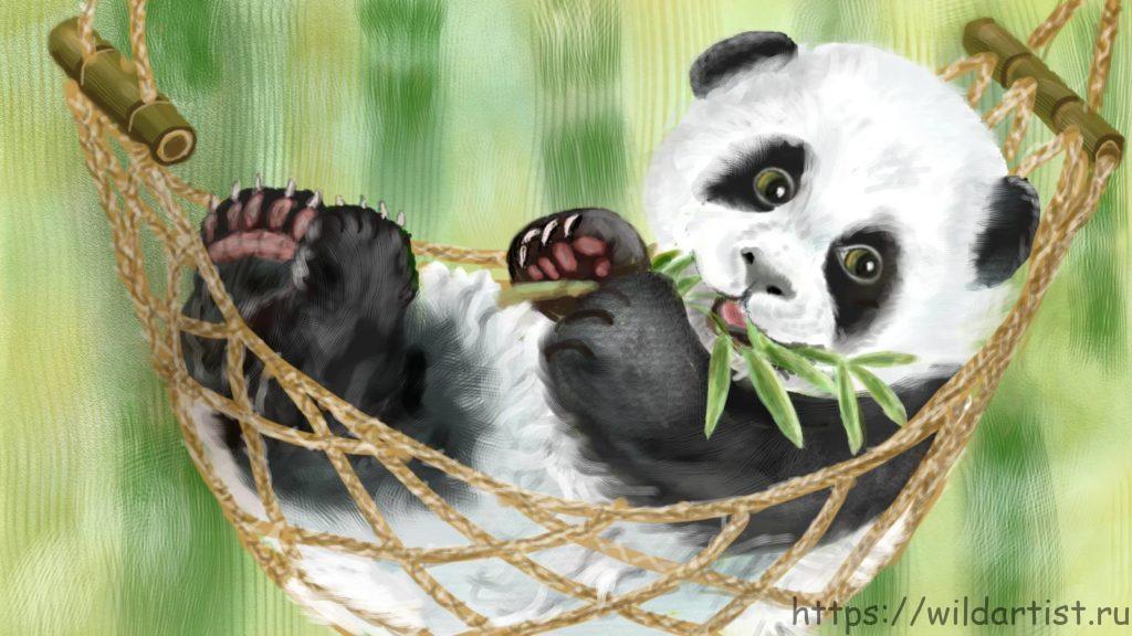 детеныш панды в гамаке