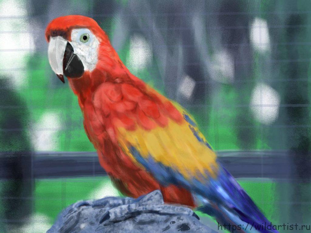 Рисунок попугая на планшете
