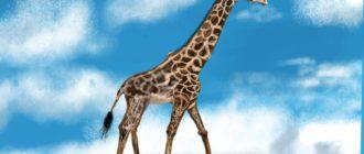рисунок жирафа на планшете