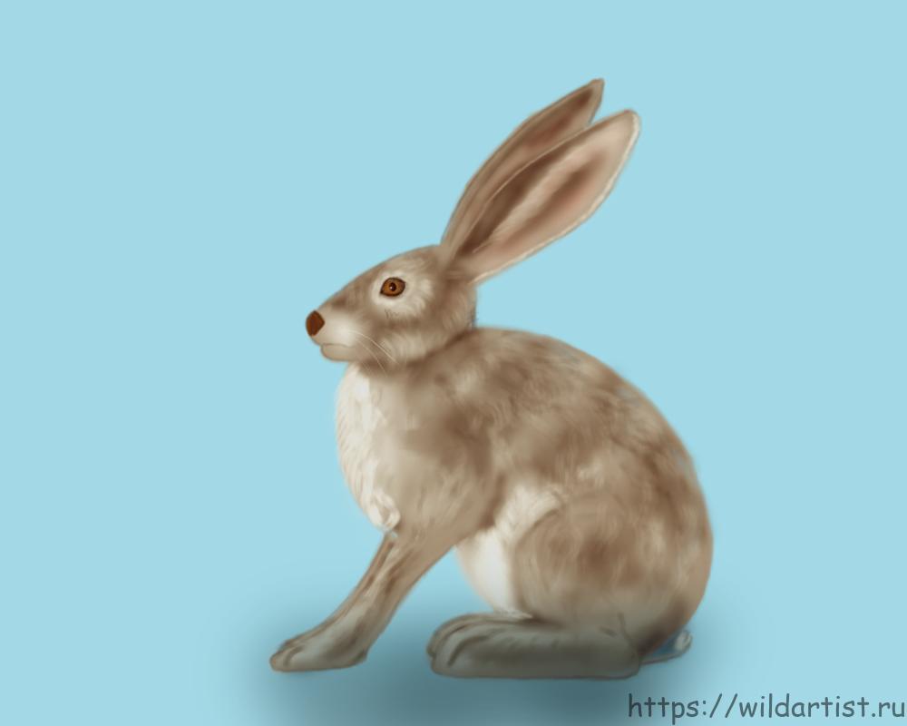 рисунок зайца-русака